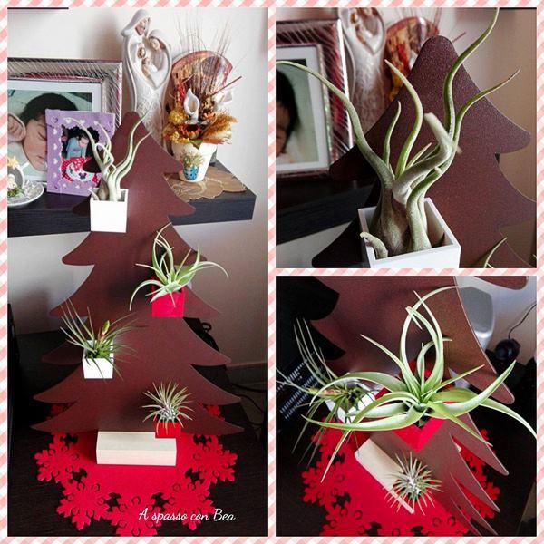 Kalamitica-tillandsia-abete-regalo-natalizio