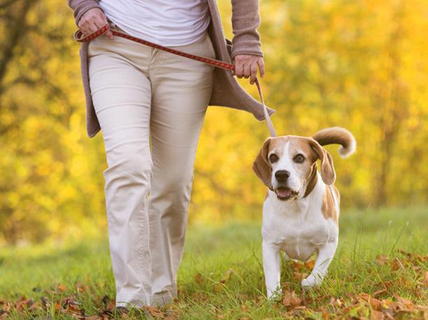10 buoni motivi per avere un cane
